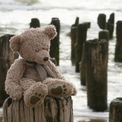 Teddy Bear by sea
